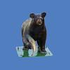 Bear Cub, 2'H #7265