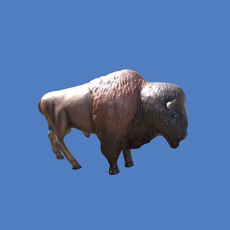 Buffalo, life size #7036