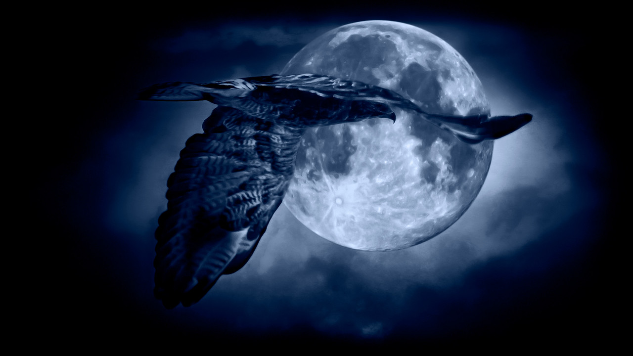 hawk small moon clouds blue