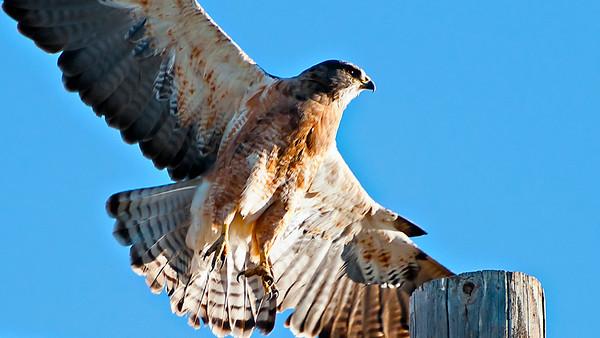 Alonzo P Hawk Sr