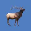 Elk #7026