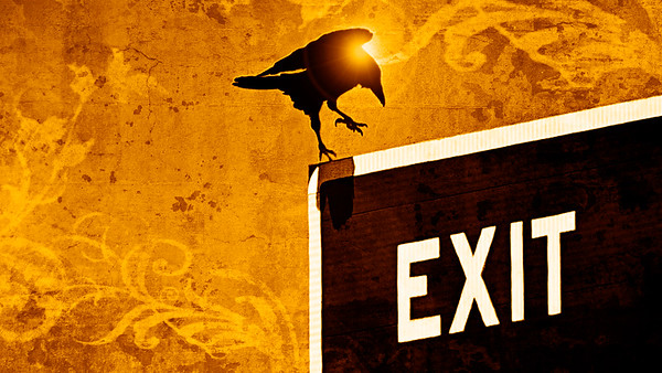 crow on exit sign golden hour grunge more golden hour