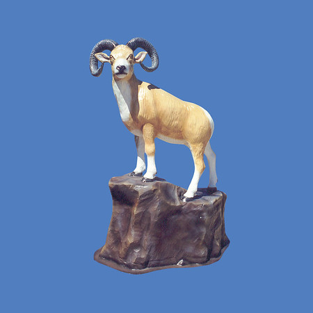 Longhorn Sheep On Rock, life size #7158