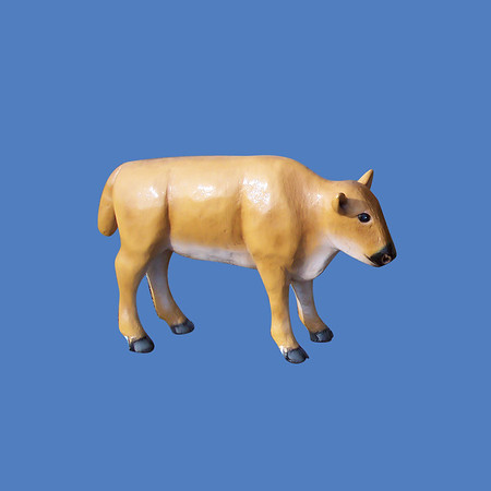 Buffalo Calf, life size #7242