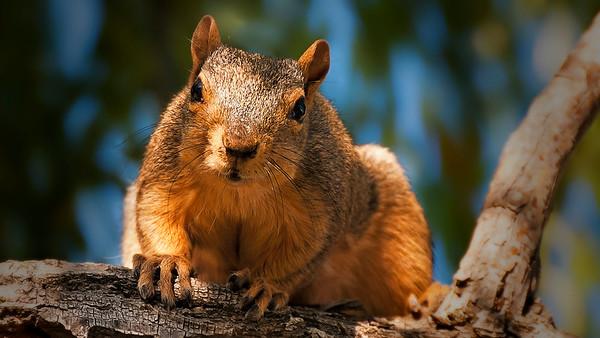 mama squirrel closeup on branch
