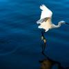 sunrise in Orlando lake and fountain at Hilton Grand Vacation swan skimming