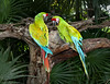 A Pair of Green Parrots