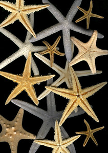 starfish on isolated background