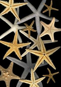 starfish on isolated background
