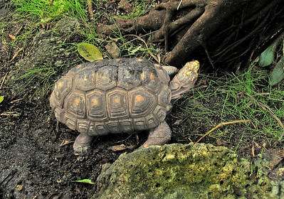 an unknown type of turtle