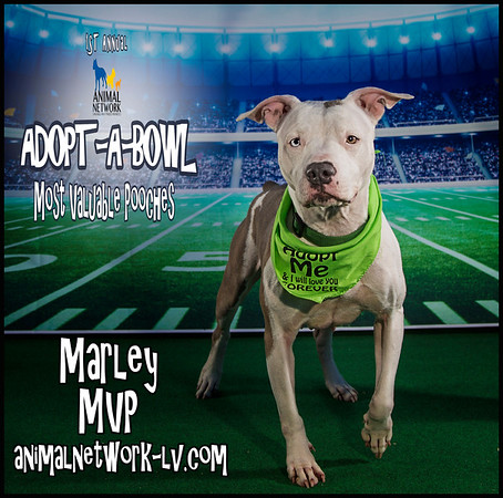 Adopt-A-Bowl  MVPs 2017