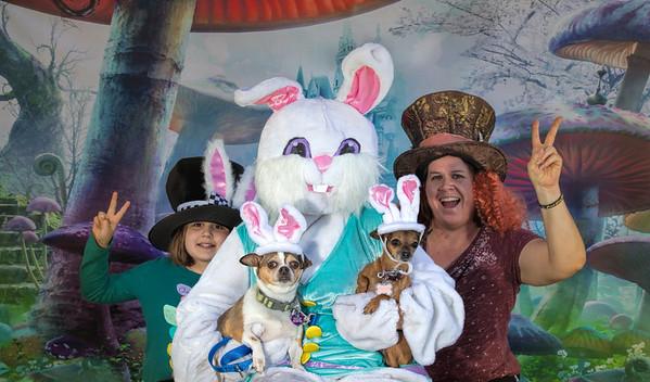 Bunny 2018