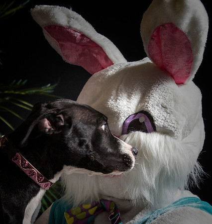 Adoptable Pooches - Easter 2014