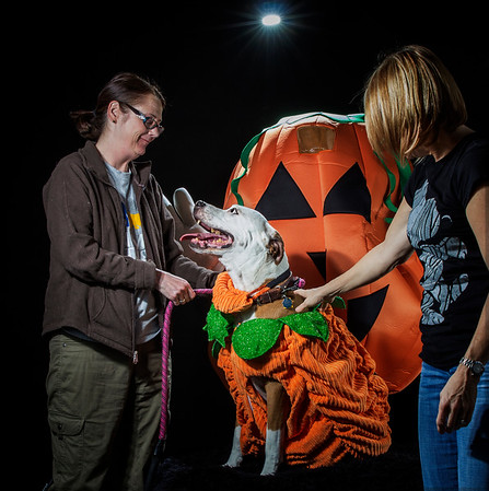 Halloween Spooktacular 2015