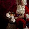"""ROCCO"" the World Famous Boing Boing Dog <a href=""http://boingboing.net/2012/12/13/santa-and-an-adoptable-dog.html?utm_source=feedburner&utm_medium=feed&utm_campaign=Feed%3A"">http://boingboing.net/2012/12/13/santa-and-an-adoptable-dog.html?utm_source=feedburner&utm_medium=feed&utm_campaign=Feed%3A</a>+boingboing%2FiBag+%28Boing+Boing%29"