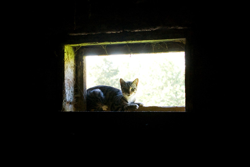 barn cat (dark, grainy photo)