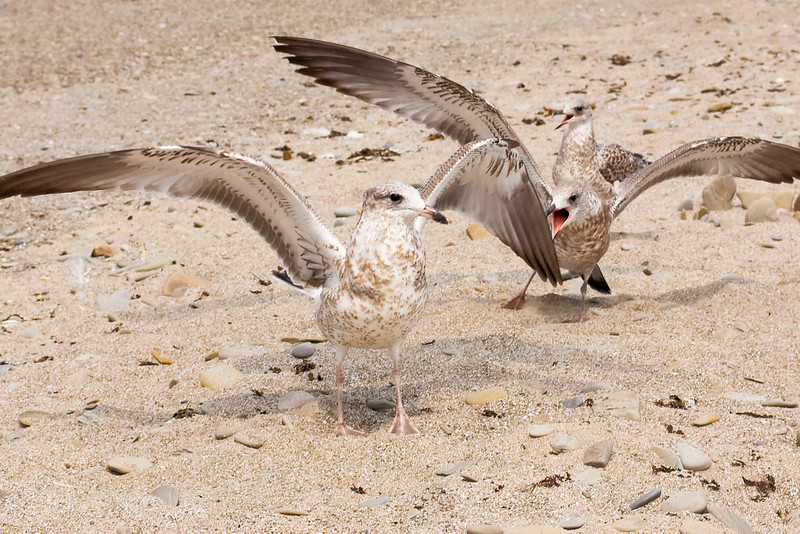 seagulls and sand