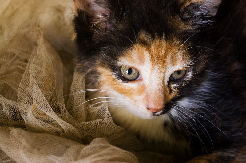 kitten with old netting