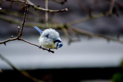 Bird mating dance