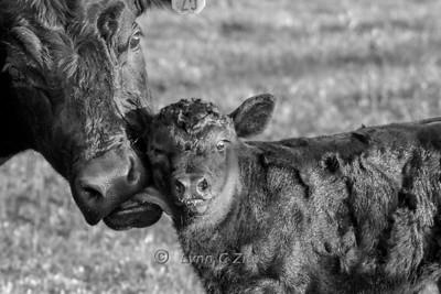 Newborn March 25, 2012