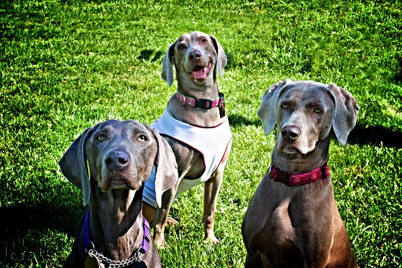 Sasha, June, and Lily
