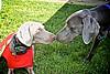 Buster and Sasha