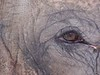 """An animal's eyes have the power to speak a great language.""        <br /> -Martin Buber"