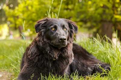 Pet Portraits  Session Fee $150 for one hour on siteAdditional hours – $100 each (in whole increments) Fee Includes One hour of photographic coverage at one or more outdoor locations of your choicePost-processing and digital retouching of all photos using professional editing softwareTeaser photos, handpicked by Shelly Sasse, posted to Shelly Sasse Photography Facebook page for public viewing and sharingPrivate (password protected) gallery online of all edited photosAll edited photos in high resolution delivered electronically at no additional costSeparate friends and family viewing gallery for client, friends, and family to view and share via social media (those images will be low-resolution and watermarked) Purchasing Prints If desired, prints and other merchandise can be purchased on the gallery page using professional photo labs