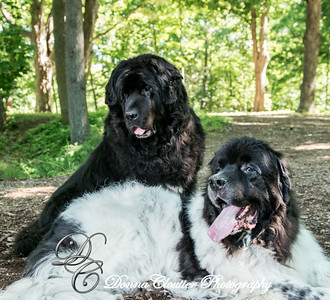 Spencer & Hemi