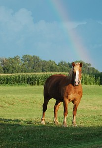 Golden Horse under a Rainbow