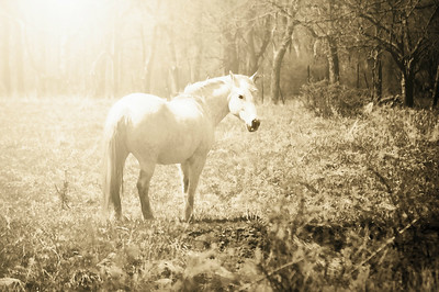 Art Photography Portrait of a Horse