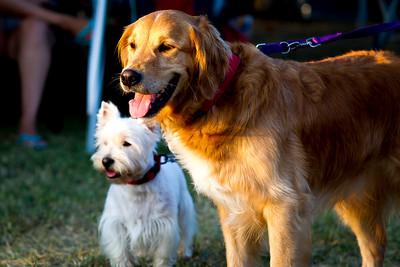 perros-razas-021-_MG_4146