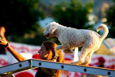 perros-razas-019-_MG_4131