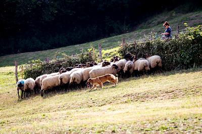perros-razas-010-_MG_3979