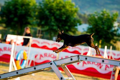 perros-razas-018-_MG_4128