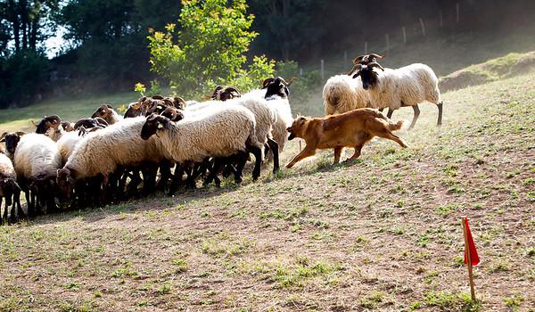 perros-razas-007-_MG_3946