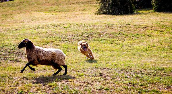 perros-razas-009-_MG_3971