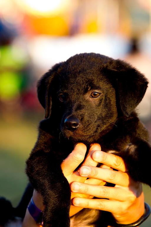 perros-razas-023-_MG_4161