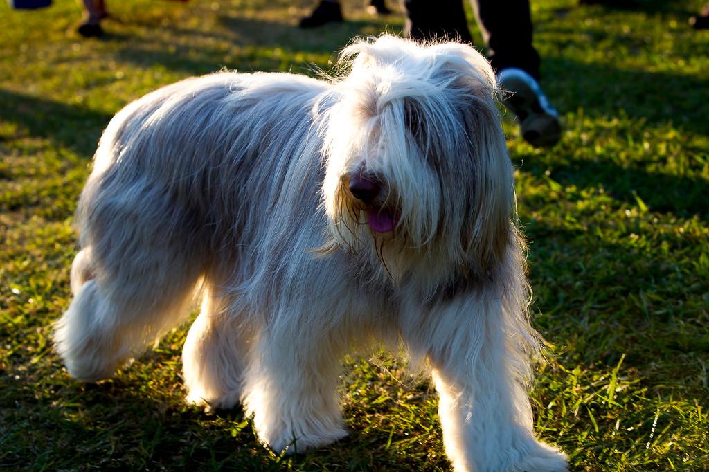 perros-razas-015-_MG_4111