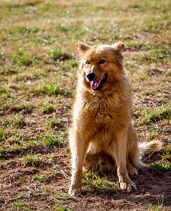 perros-razas-012-_MG_4037