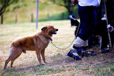 perros-razas-006-_MG_3935