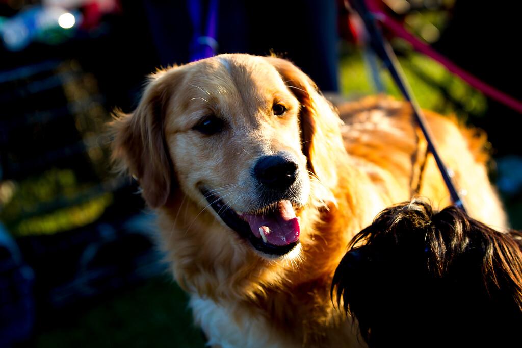 perros-razas-016-_MG_4112