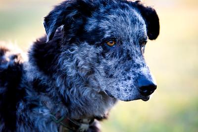 perros-razas-022-_MG_4151