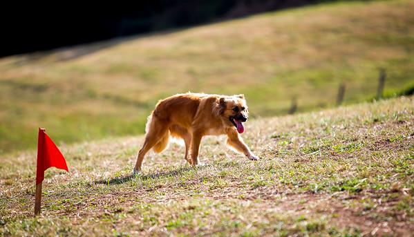 perros-razas-008-_MG_3966