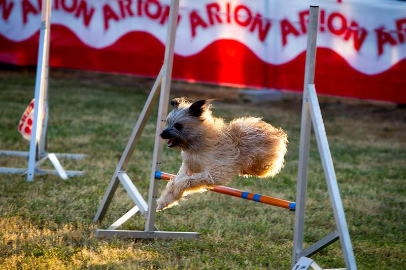 perros-razas-020-_MG_4136.jpg