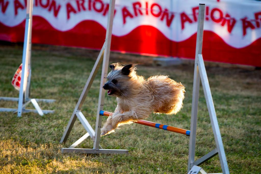 perros-razas-020-_MG_4136