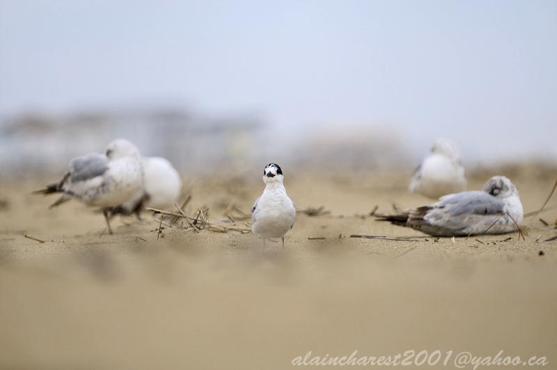 Repos des oiseaux