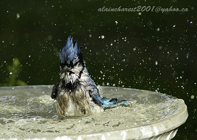 Blue bathing