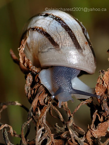 Snail on died vegetation