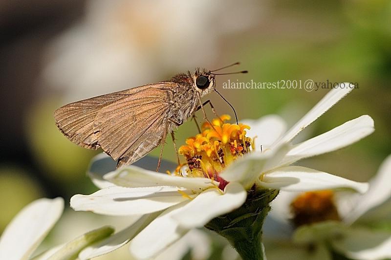South Carolina Butterfly